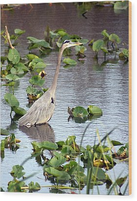 Heron Fishing In The Everglades Wood Print by Marty Koch