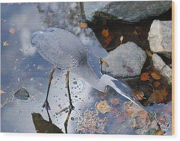 Heron Fishing Photograph Wood Print by Don  Wright