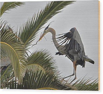 Heron In The Palm Wood Print