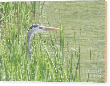 Heron In The Reeds Wood Print by Anita Oakley