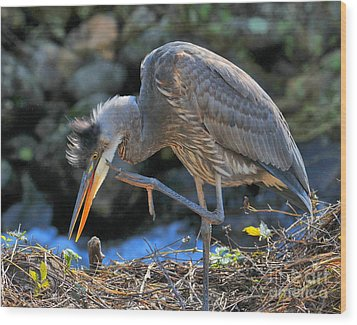 Wood Print featuring the photograph Heron Scratch by Debbie Stahre
