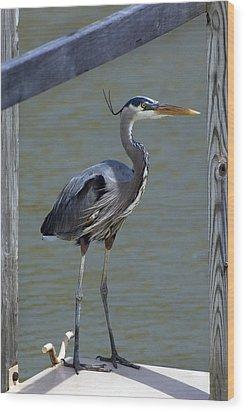 Heron Standing Wood Print