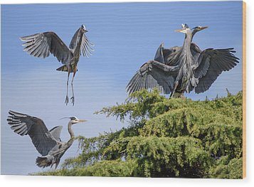 Herons Mating Dance Wood Print