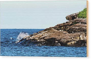 Herring Gull Picnic Wood Print