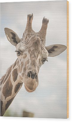 Hi There, I'm A Giraffe Wood Print by David Collins