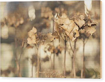 Wood Print featuring the photograph Hibernating Beautifully by Lisa Knechtel