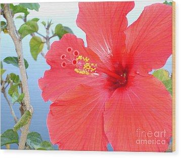 Hibiscus At Full Bloom Wood Print by Chad Natti