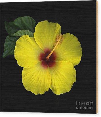 Hibiscus Blossom Wood Print by Christian Slanec