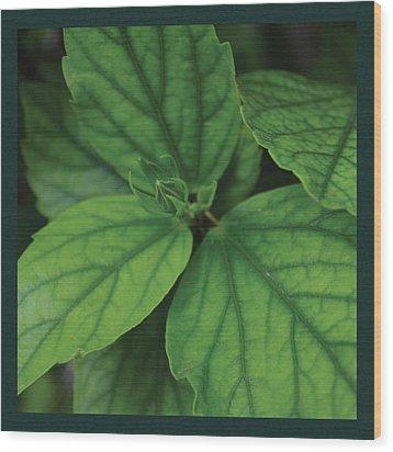 Hibiscus Bud 2 Wood Print