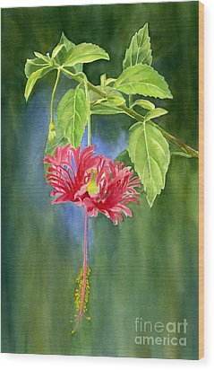 Hibiscus Chinese Red Lantern With Background Wood Print by Sharon Freeman