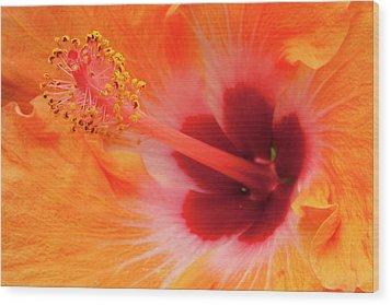 Hibiscus Close-up Wood Print by Andrew Soundarajan