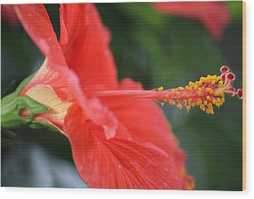 Hibiscus Closeup Wood Print