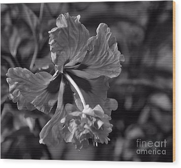 Wood Print featuring the photograph Hibiscus In Blackwhite by Ken Frischkorn