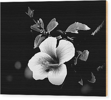 Wood Print featuring the photograph Hibiscus In The Dark by Lori Seaman