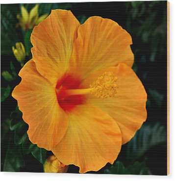 Wood Print featuring the photograph Hibiscus by Marilynne Bull