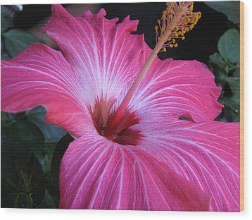 Hibiscus Photograph Wood Print by Barbara Yearty