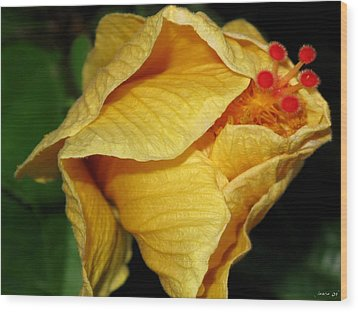 Hibiscus Profile Wood Print