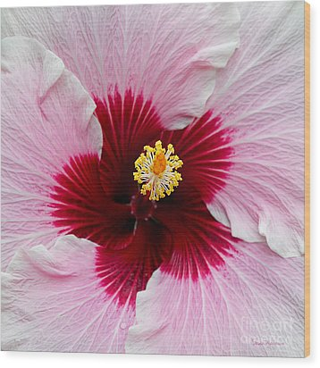 Hibiscus With Cherry-red Center Wood Print by Susan Wiedmann
