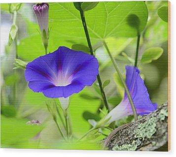 Wood Print featuring the photograph Hidden Beauty by Corinne Rhode