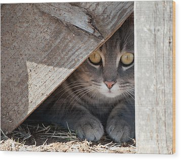 Hide A Kitty Wood Print