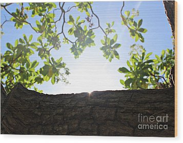 Wood Print featuring the photograph Hide And Seek by Cendrine Marrouat