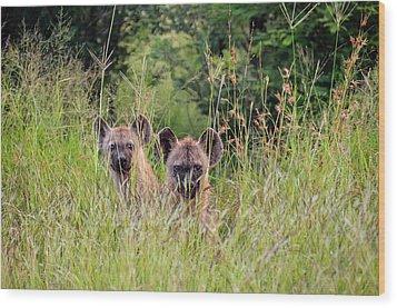 Hide-n-seek Hyenas Wood Print