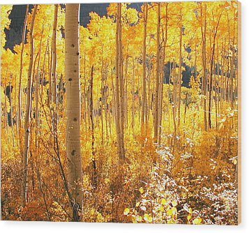 High Country Gold Wood Print by The Forests Edge Photography - Diane Sandoval