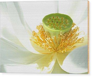 High Key Lotus Wood Print by Sabrina L Ryan