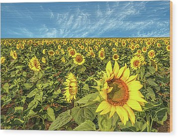 High Plains Sunflowers Wood Print