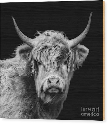Highland Coo Wood Print by Linsey Williams
