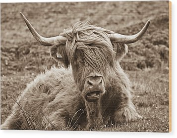 Wood Print featuring the photograph Highland Cow  by Justin Albrecht