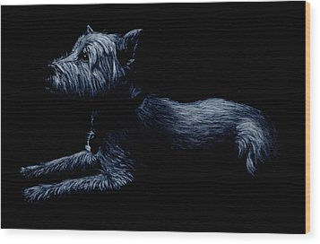 Highland Terrier Wood Print