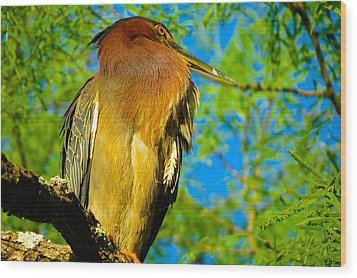 Hill Country Perch Wood Print