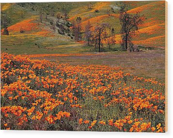 Hills Of Orange Near Antelope Valley Poppy Preserve In California Wood Print by Jetson Nguyen