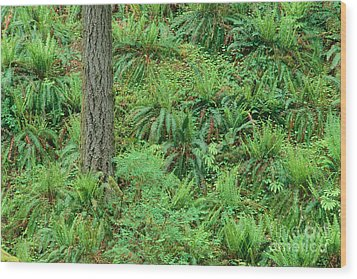 Hillside Ferns Wood Print by Greg Vaughn - Printscapes