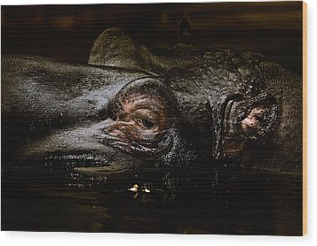 Wood Print featuring the photograph Hippo by Joerg Lingnau