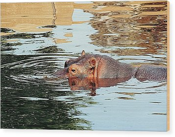 Hippo Scope Wood Print by Jan Amiss Photography
