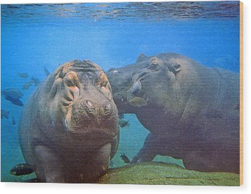 Hippos In Love Wood Print