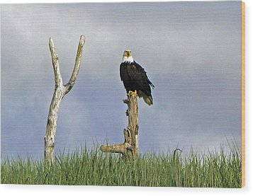 His Majesty Wood Print by Pamela Patch