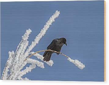 Hoarfrost And The Crow Wood Print by Alana Thrower