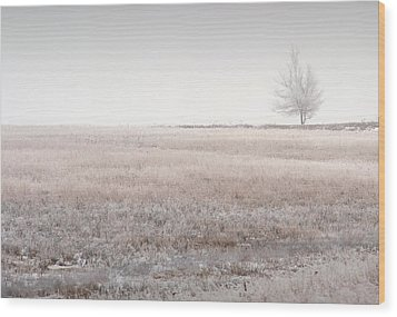 Hoarfrost Pasture Wood Print by Fred Lassmann