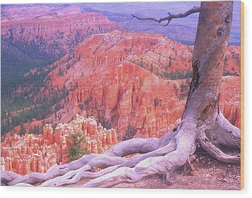 Holding On Wood Print by Dave Hampton Photography