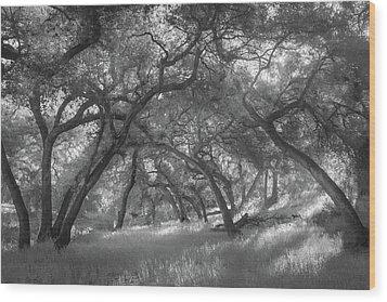 Wood Print featuring the photograph Hollenbeck Oak Hollow by Alexander Kunz