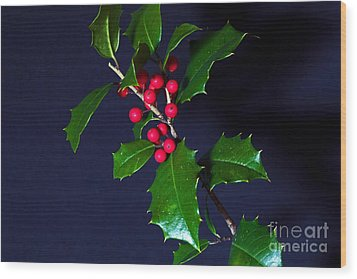 Holly Wood Print by Robert Pilkington