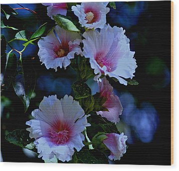 Hollyhock Blooms Wood Print by Martin Morehead