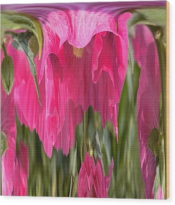 Hollyhock Drape Abstract Wood Print