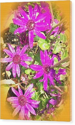 Hollywood Flower Stars Wood Print