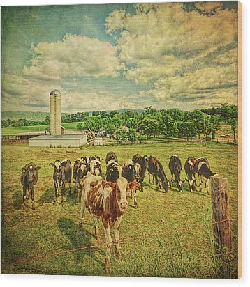 Wood Print featuring the photograph Holy Cows by Lewis Mann