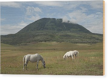 Wood Print featuring the photograph Home On The Range by Daniel Hebard