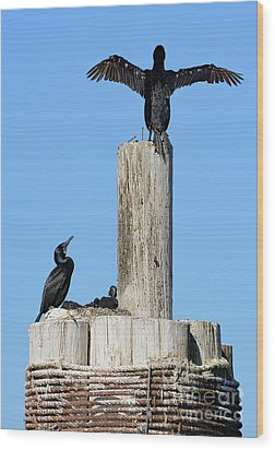 Wood Print featuring the photograph Home Sweet Home Brandt's Cormorant Style by Susan Wiedmann